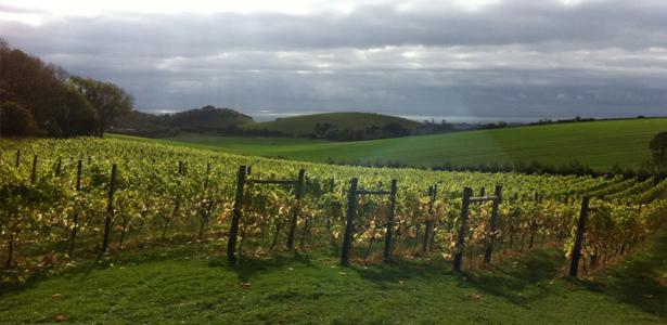vin-terlingham