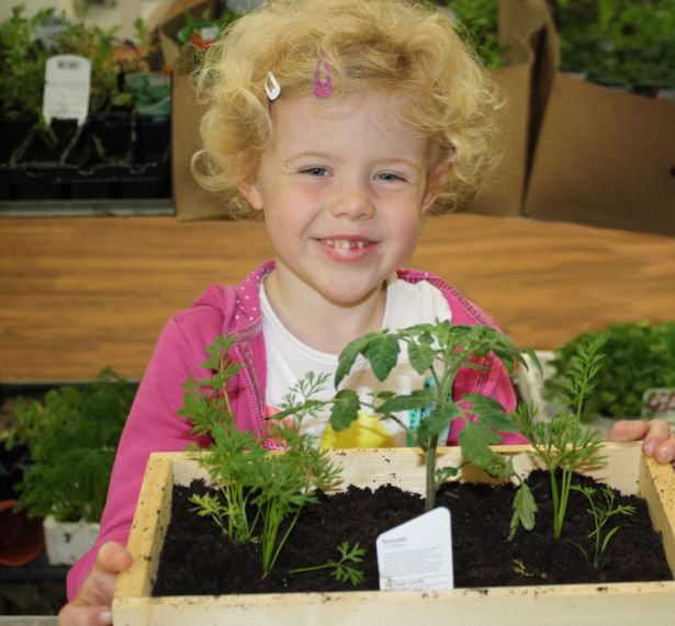 Child.planting.veg.box.1