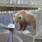 bearcubs, animal rescue, wildwood